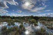 Landschaftlich Florida Everglades