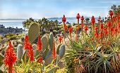 Prickly Pear Orange Aloe Cactus Morning Pacific Ocean Landscape Channel Islands Santa Barbara Califo