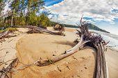 Dead tree trunks on tropical beach