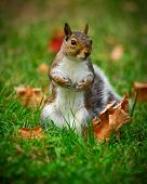 Cute Squirrel Standing In Grass Closeup