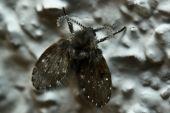 Mini Schmetterling