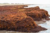 Buildup of Seaweed on the Beach