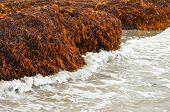 Seaweed Cliffs