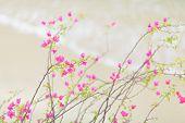 Pink flower over sandy beach
