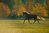 foto of beautiful horses  - powerful of beautiful well appointed horse at sunset in a field - JPG