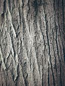 Oak tree bark texture