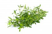 pic of origanum majorana  - Savory bunch isolated on a white background - JPG