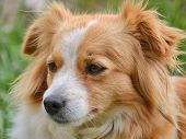 Cute Cross-breed Dog