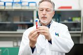 stock photo of vitro  - Man at work in a chemical laboratory - JPG
