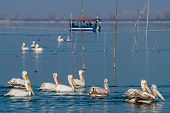 Lake Kerkini In Greece