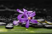 Still life with beautiful purple orchid with row of  green plant stem on black stones