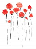 watercolor vintage flowers poppy