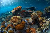 Underwater shot of the vivid coral reef at sunny day