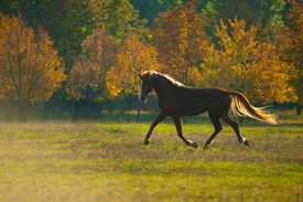 image of year horse  - powerful of beautiful well appointed horse at sunset in a field - JPG