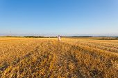 Child In Wheat Field. Outdoor.