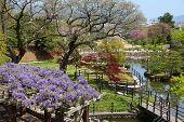 Japanese Garden, Himeji