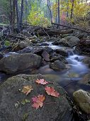 Autumn Along the Creek