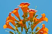 Beautiful orange mediterranean flowers at morning
