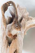 Squirrel Longing