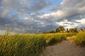 Beach path through the dune grasses. Focus on the grass in foreground