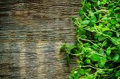foto of oregano  - oregano on a dark wood background - JPG