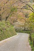 Scenery 0f Sakura trees Road, Yoshino, Japan