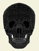 Human Skull Vector 01