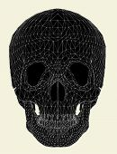 stock photo of head femur  - Medical Anatomy Human Head Bone Skull Illustration Vector - JPG
