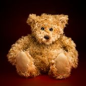picture of mating bears  - Portrait of a fluffy toy teddy bear isolated against a red and black background - JPG