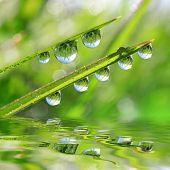 Fresh green grass with dew drops closeup.