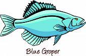 image of grouper  - Grouper or Serranidae saltwater marine fish color illustration - JPG