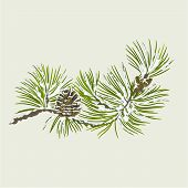 Pine Branch With Snow And Pine Cone Christmas Theme Vector