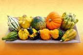 Colorful Variety Of Pumpkins In Wooden Tray.