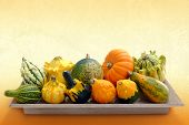 Variety Of Pumpkins On Wooden Tray.