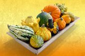 Wooden Tray With Variety Of Pumpkins.