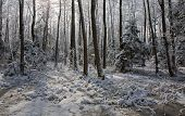 Snowfall After Wetland Stand In Morning