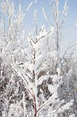 Winter tree branch with snow