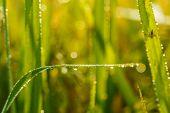 Drops Dew Green Blur