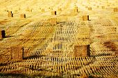 Detail of haybail rows hay bails farming on farm agricultural growing