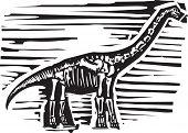 Apatosaurus Fossil