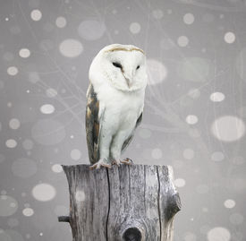 foto of snow owl  - A beautiful barn owl above a trunk with a abstract of snow and branches with textured effect - JPG