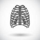 image of sternum  - Human thorax - JPG