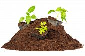 foto of pot plant  - Bunch dirty earthy peat young plant pots for seedlings - JPG
