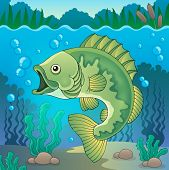 picture of freshwater fish  - Freshwater fish topic image 1  - JPG