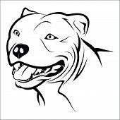 foto of pitbull  - Vector illustration  - JPG