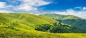 image of cloud forest  - panoramic summer landscape with few trees on the grassy hillside meadow near the forest in mountain - JPG
