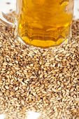 image of malt  - beer glass at malt grains on white background - JPG