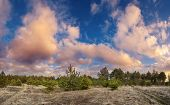 foto of blue spruce  - Green pine trees in spring with blue sky and beautiful clouds at sunset - JPG