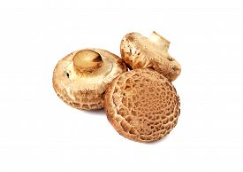 picture of crimini mushroom  - fresh crimini mushroom isolated on white background - JPG