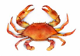 foto of boil  - Red boiled blue crab isolated on white background illustration - JPG